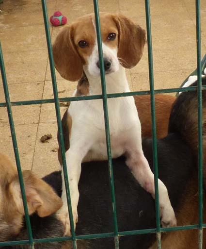 heimatlose hunde suchen zuhause